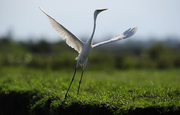 Картинка природа, птица, танец, полёт