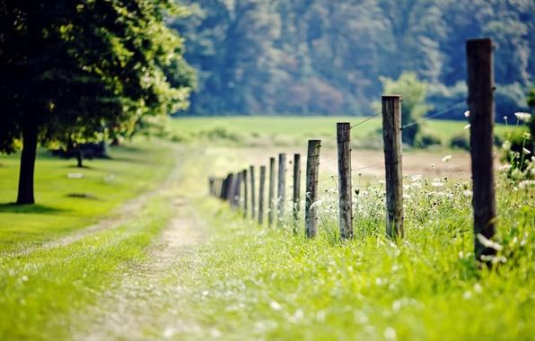 Картинка зелень, трава, листья, деревья, цветы, природа, фон, дерево, обои, листва, забор, размытие, ограда, луг, ограждение, …