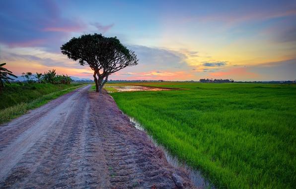 Картинка дорога, поле, небо, облака, дерево