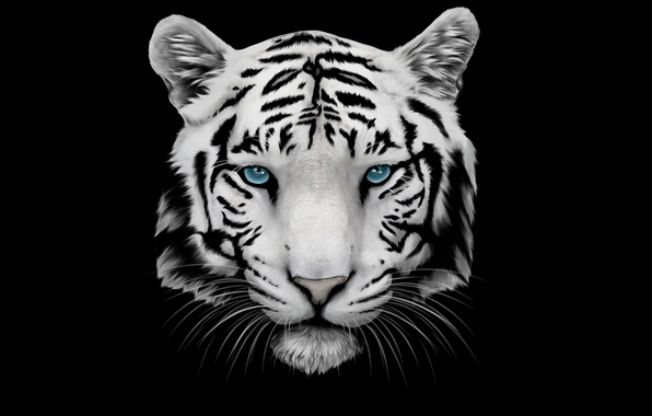Картинка белый, усы, морда, тигр, голова, tiger