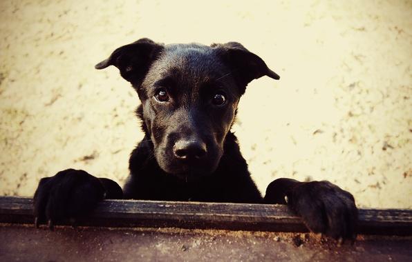 Картинка песок, собаки, собака, лапы, нос, Пес