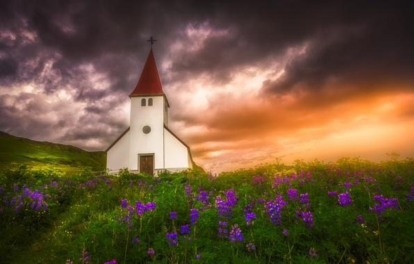 Картинка закат, цветы, луг, церковь, Исландия, Iceland, люпины, Вик, Vik i Myrdal