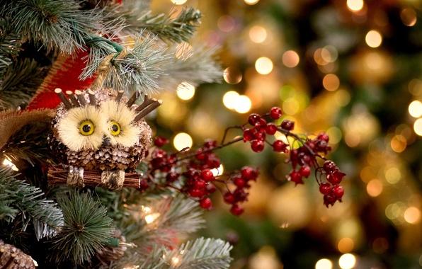 Картинка зима, украшения, ягоды, праздник, сова, игрушки, елка, ель, Новый Год, Рождество, красные, ёлка, Christmas, New …