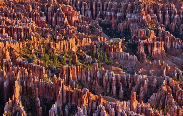 Картинка деревья, горы, скалы, Юта, США, Bryce Canyon National Park