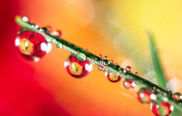 Картинка трава, вода, капли, лист, роса, отражение