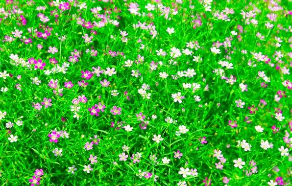 Картинка поле, трава, цветы, сад, луг