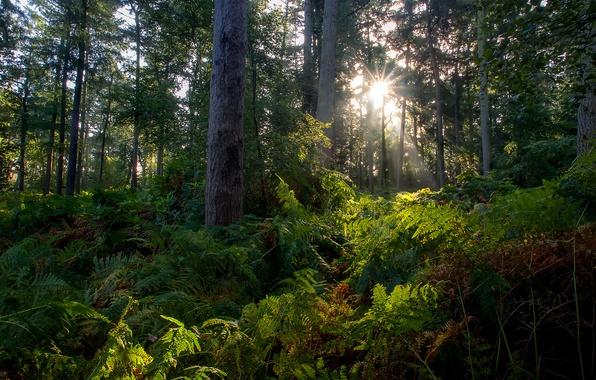 Картинка лес, свет, утро