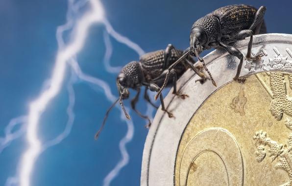 Картинка макро, насекомые, молния, жуки, евро, парочка, монета, денежка, Скосарь одиночный, Долгоносики