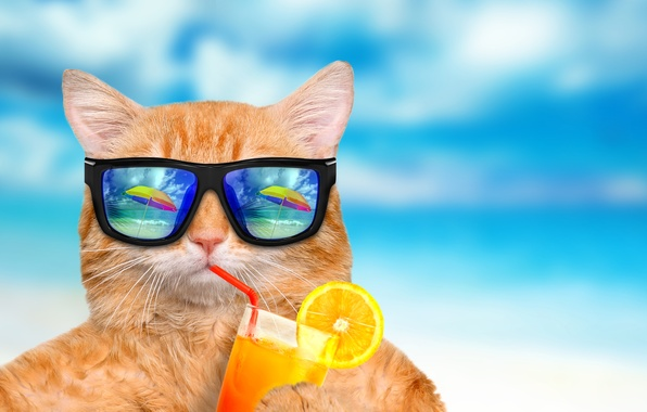 Картинка море, кот, отражение, синева, фон, апельсин, юмор, зонт, сок, рыжий, очки, коктейль, трубочка, боке