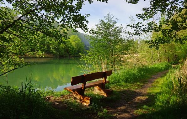 Картинка зелень, лес, трава, деревья, скамейка, ветки, озеро, Швейцария, лавочка, тропинка, кусты, Perolles