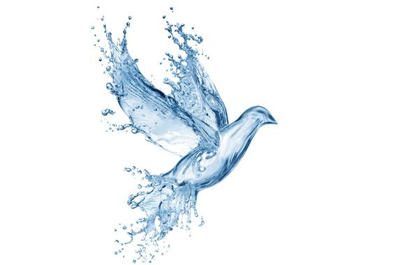 Картинка вода, капли, брызги, креатив, рисунок, голубь, всплеск, арт, Water, art, splash, drops, dove, pigeon, drawing, …