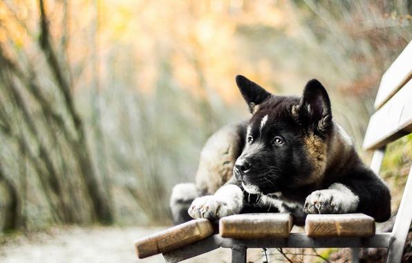 Картинка взгляд, друг, собака, скамья