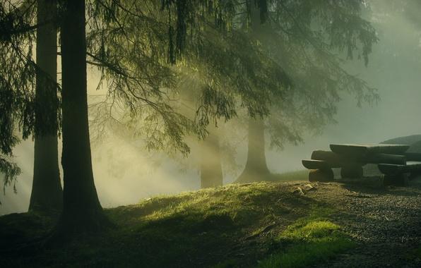 Картинка лес, деревья, природа, стол, елки, утро, бревна, хвоя, солнечные лучи, лавочки