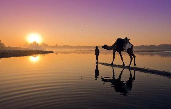 Картинка пейзаж, закат, река, верблюд
