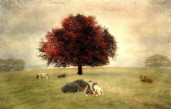 Картинка пейзаж, стиль, фон, коровы