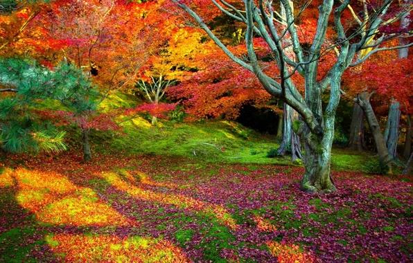 Картинка осень, листья, деревья, пейзаж, природа, фон, дерево, красота, ярко, листопад, красочно