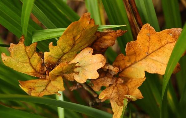 Картинка осень, зеленый, Листья