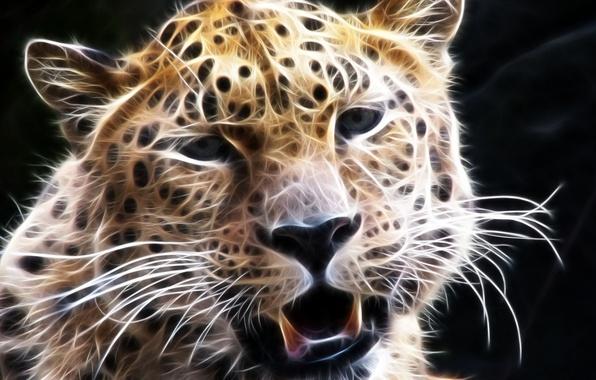 Картинка усы, взгляд, морда, леопард, 3D графика