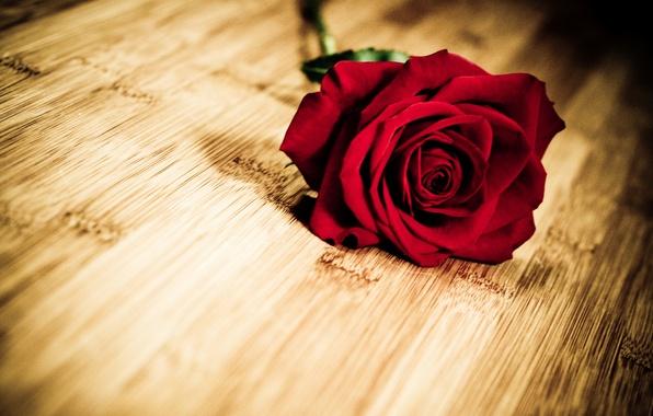 Картинка цветок, цветы, фон, widescreen, обои, роза, лепестки, wallpaper, красная, flower, широкоформатные, background, полноэкранные, HD wallpapers, …