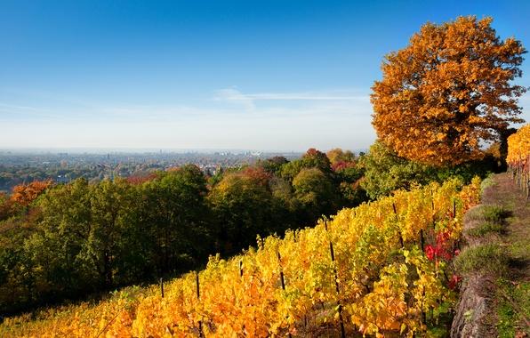 Картинка осень, небо, листья, деревья, пейзаж, природа, город, листва, желтые, Дрезден, холм, зеленые, виноградник, Dresden