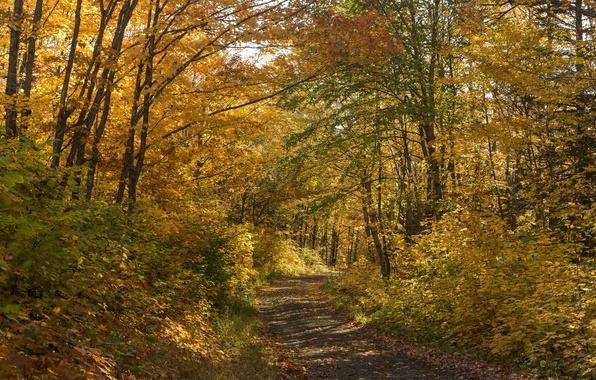 Картинка осень, лес, листья, деревья, путь, тени, солнечный свет