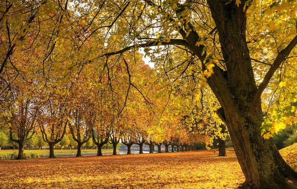 Картинка осень, трава, листья, река, дерево