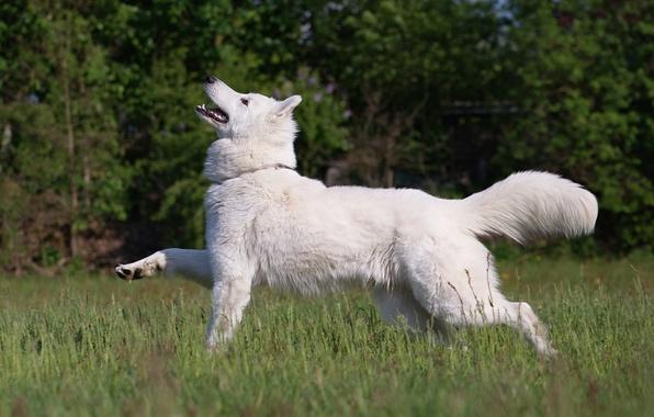 Картинка лес, трава, друг, собака, луг, пес