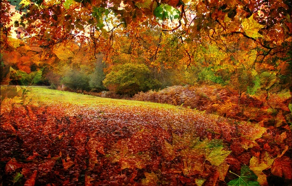 Картинка осень, лес, листья, деревья, рендеринг, коллаж, Англия, Нью-Форест, Хэмпшир