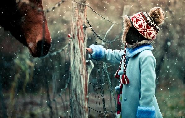 Картинка зима, снег, настроение, сетка, лошадь, ограждение, девочка
