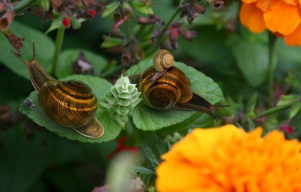 Картинка цветы, лист, Улитки