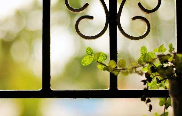 Картинка цветок, листья, фон, размытость, решетка, металлическая, вазон