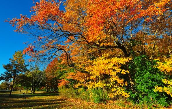 Картинка осень, лес, небо, трава, листья, деревья, парк