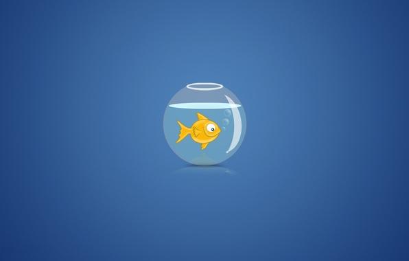 Картинка вода, пузыри, фон, аквариум, золотая рыбка
