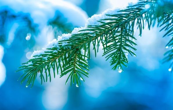 Картинка зима, капли, макро, снег, иголки, дерево, елка, ветка, Ель, боке
