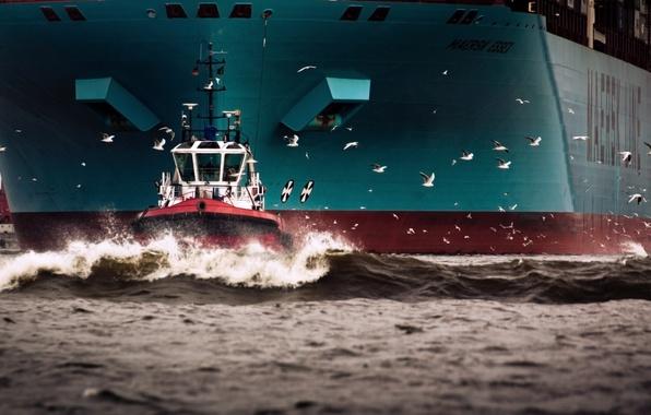 Картинка Вода, Море, Борт, Птицы, Корпус, Судно, Чайки, Контейнеровоз, Бак, Отход, Maersk, Maersk Line, Буксир, Maersk …