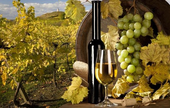 Картинка вино, белое, виноград, виноградник, пробки, бочка