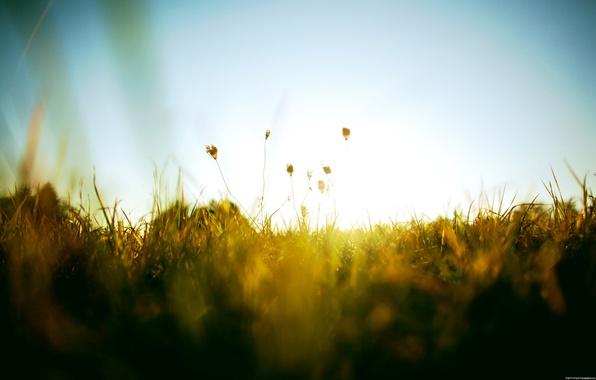 Картинка зелень, лето, небо, трава, солнце, тепло