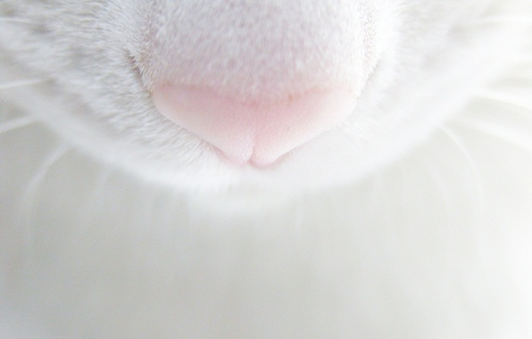 Картинка усы, кошак, нос