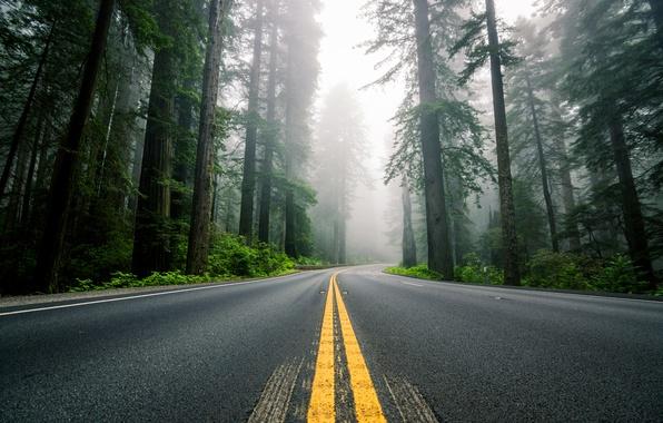 Картинка дорога, лес, деревья, природа, туман, разметка, шоссе, США, Северная Америка, секвойи
