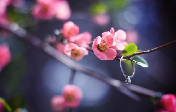 Картинка цветок, листья, макро, свет, природа, блики, веточка, розовый, ветка, весна, лепестки, размытость, кольцо