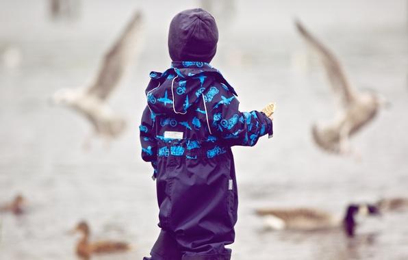 Картинка полет, птицы, дети, фон, обои, улица, настроения, шапка, мальчик, голуби