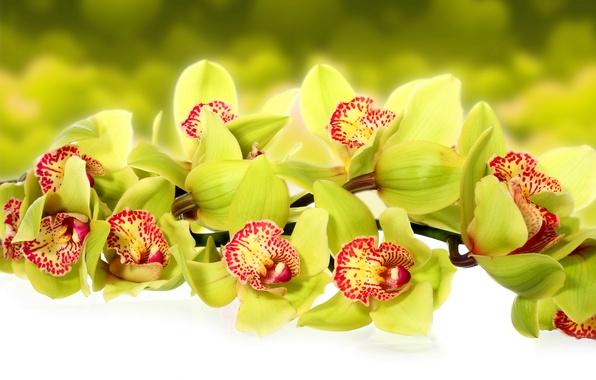 Картинка макро, цветы, фото, орхидеи