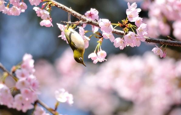 Картинка цветы, дерево, птица, весна, солнечно, цветение, желтая