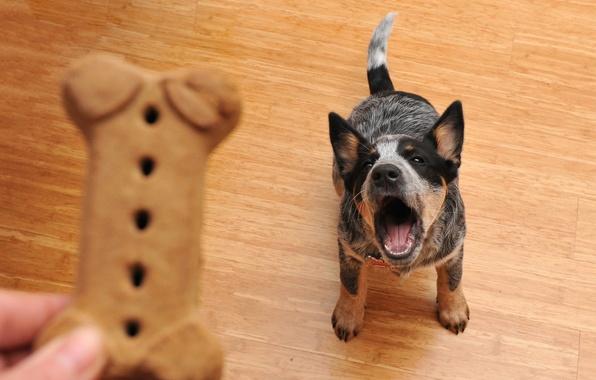 Картинка друг, еда, собака