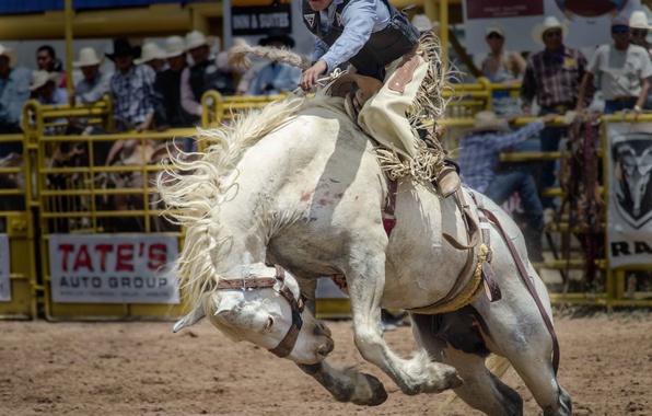 Картинка конь, спорт, лошадь, всадник, Родео