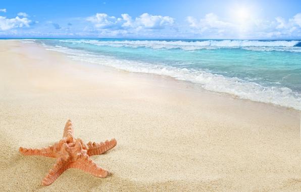 Картинка beach, sea, sun, sand, starfish