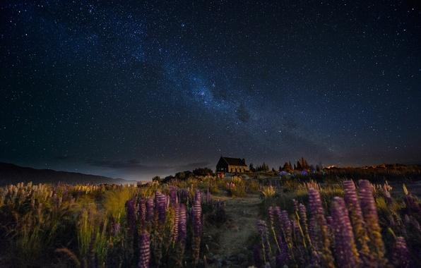 Картинка небо, цветы, ночь, дом, ветер, тропа, звёзды, Новая Зеландия, холм, млечный путь, Люпины