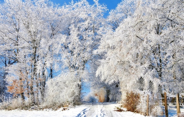 Картинка зима, иней, дорога, снег, деревья, следы, забор