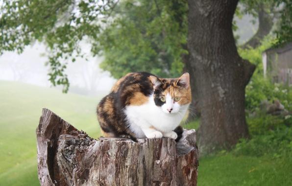 Картинка кошка, природа, дерево, пень, сидит