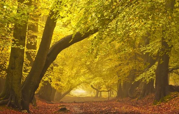 Картинка дорога, осень, пейзаж, туман